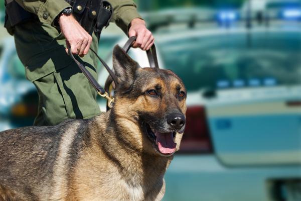 canine drug searches,canine drug searches lawyer,canine drug searches attorney,canine drug searches Texas